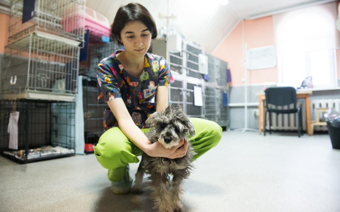 Породистый щенок с родословной ищет хозяев